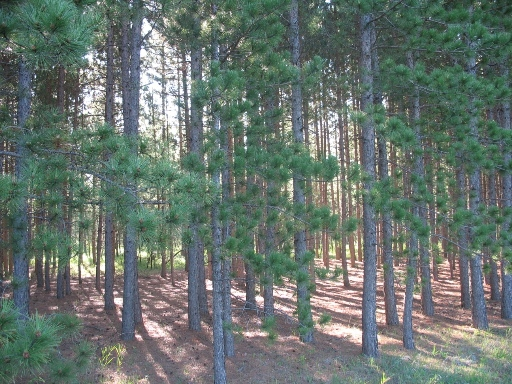 Штейнбах хвойный лес steinbach temperate coniferous