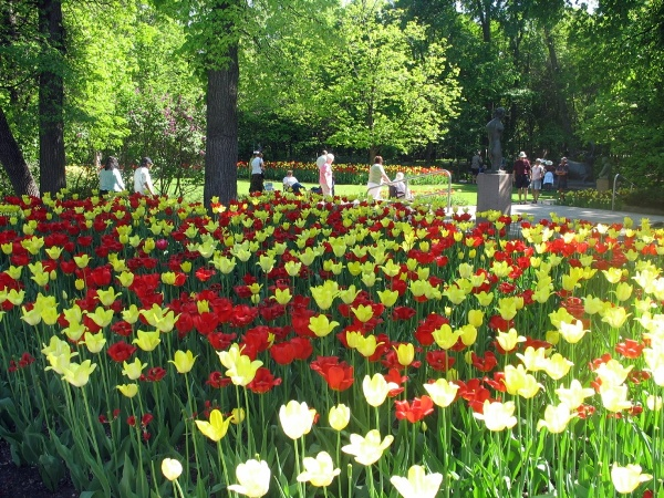 фотографии Виннипега, Виннипег, Ассинибоин парк, тюльпаны. Assiniboine park, Winnipeg, tulips