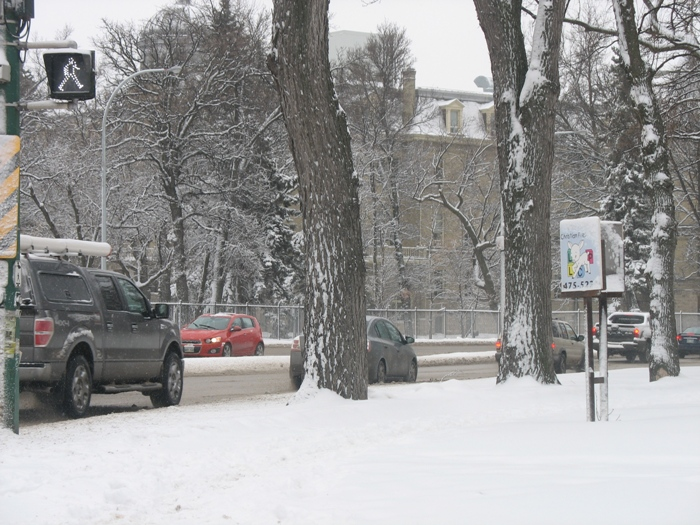 Виннипег погода в Виннипеге весна снег Winnipeg Wellington Crescent snow