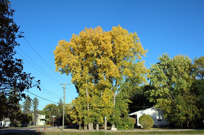 Виннипег Чарльзвуд осень Winnipeg Charleswood autumn