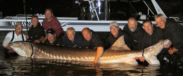 Рыбалка в Канаде. Осётр. 11 foot Sturgeon, Red River, Lockport, Manitoba